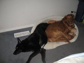 Pushing the big dog aside.