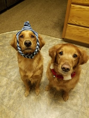 They do enjoy playing dress up.
